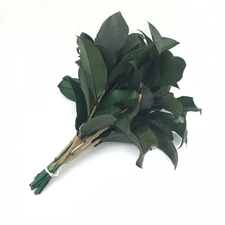 Preserved Osmanthus Leaves
